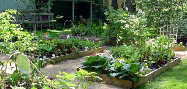 منزلك حديقة خضراوات مصغرة …كيف