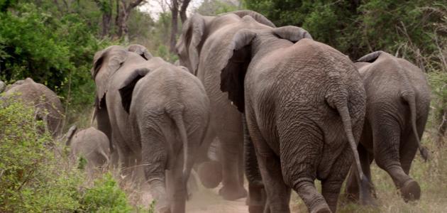 أسباب تناقص أعداد الحيوانات