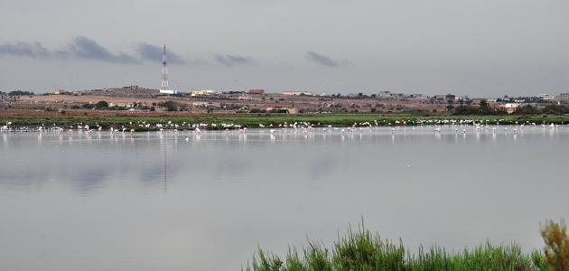 مدينة قربة التونسية