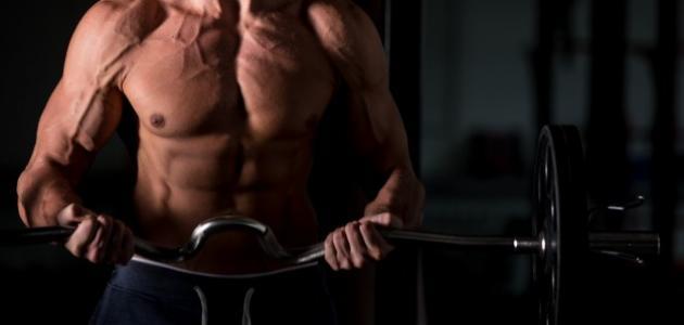 طريقة تقسيم عضلات الجسم