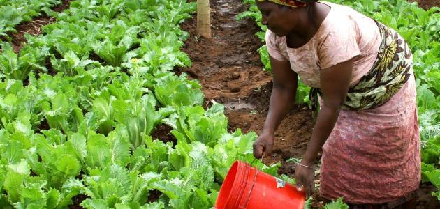 مظاهر التنمية في جنوب افريقيا