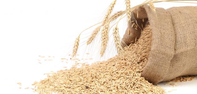 ما هي نخالة القمح