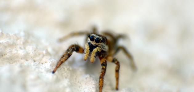 تفسير رؤية العنكبوت في 12