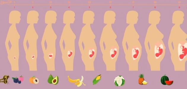 معدل زيادة وزن الجنين
