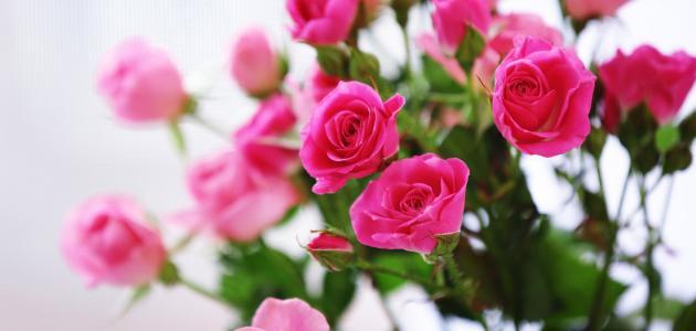 ef559628dfa78 تفسير الورد في الحلم - موضوع