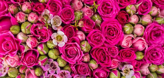 تفسير الورد في المنام موضوع