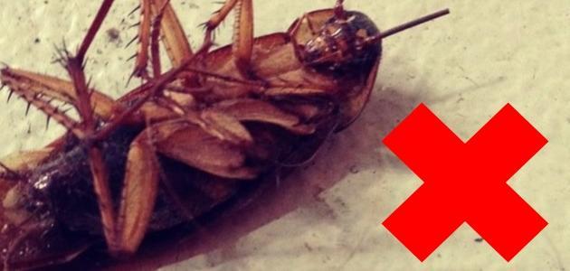 طريقة للقضاء على الصراصير في المنزل