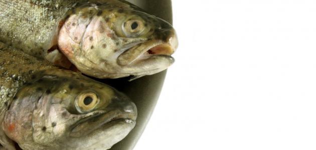 تفسير حلم سمك