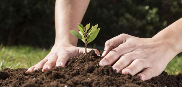 مراحل بناء القيم