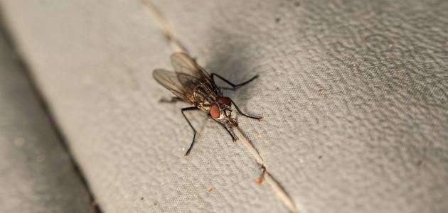 ظهور الحشرات في المنزل