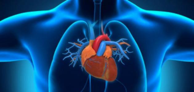 ما وظيفة القلب
