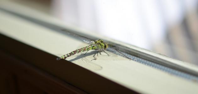 ظهور حشرات في البيت