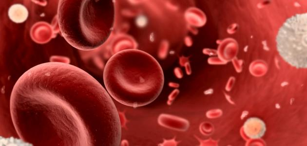 ما هي صفائح الدم