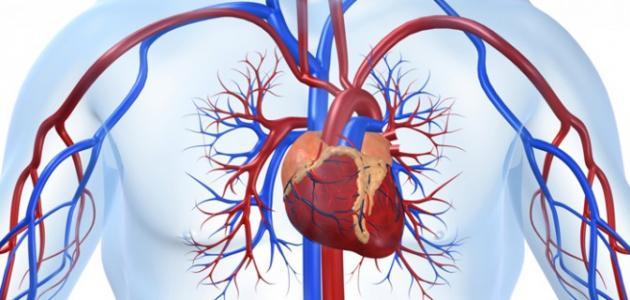 ما هي وظيفة القلب