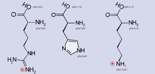 فوائد الأحماض الأمينية لبناء الأجسام