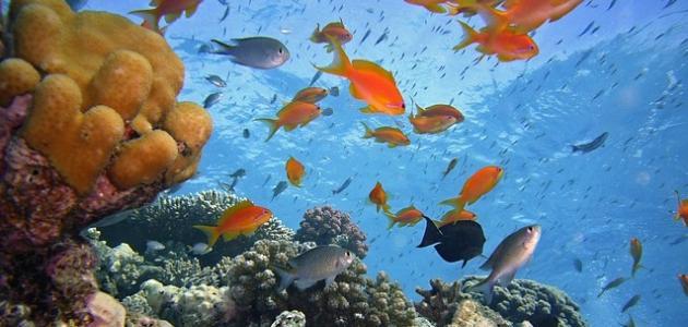 عالم الأسماك والبحار