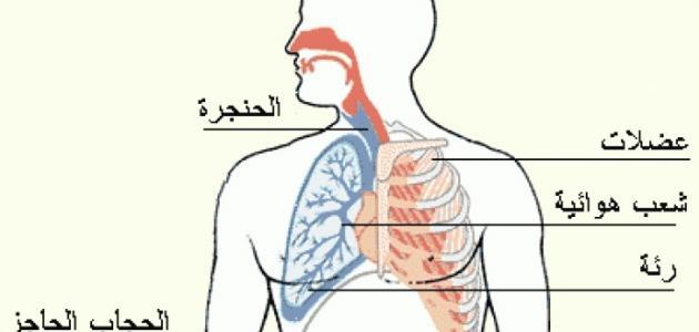ماذا يتنفس الإنسان