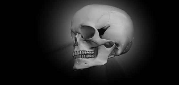 كم عدد العظام الموجودة في الجمجمة