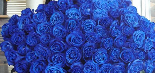 d15de260c3e22 ماذا تعني الوردة الزرقاء - موضوع