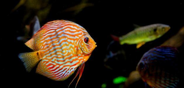 معلومات عن أنواع الأسماك