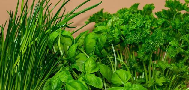 طرق علاج تساقط الشعر بالأعشاب