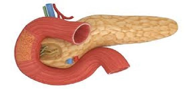 المسؤول عن إفراز الإنسولين في الجسم