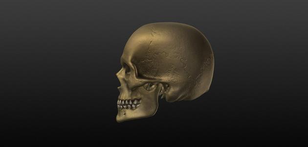 عدد العظام في جمجمة الإنسان