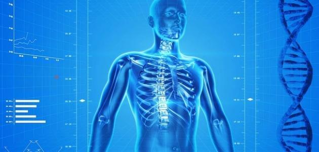 ما هو عدد أضلاع القفص الصدري في الإنسان