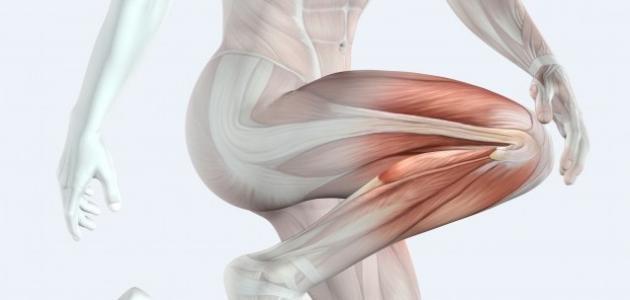 ما عدد العضلات في جسم الإنسان