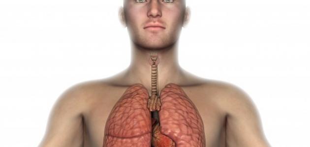 ما تعريف ومكونات الجهاز التنفسي