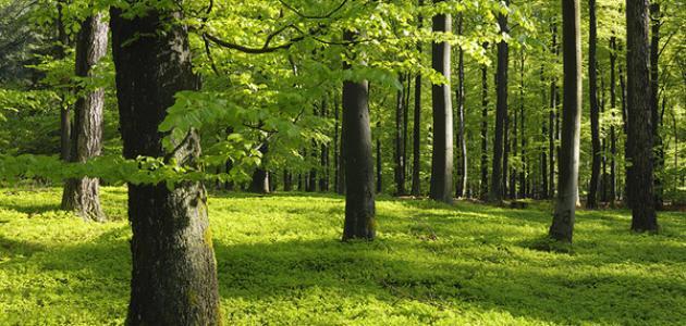 لماذا تجب المحافظة على الغابة