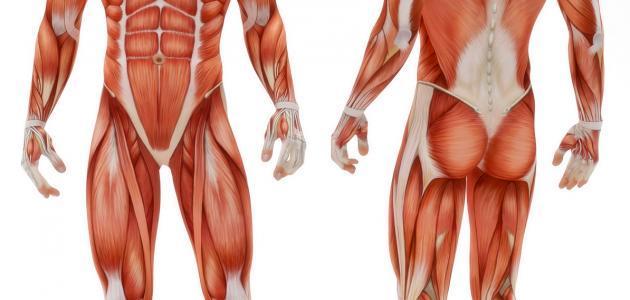 ما هي أجهزة جسم الإنسان