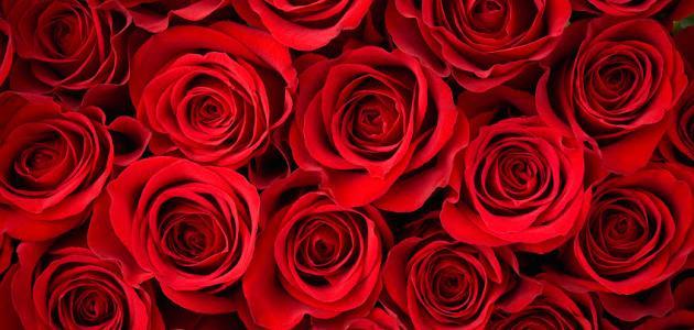 عبارات جميلة عن الحب