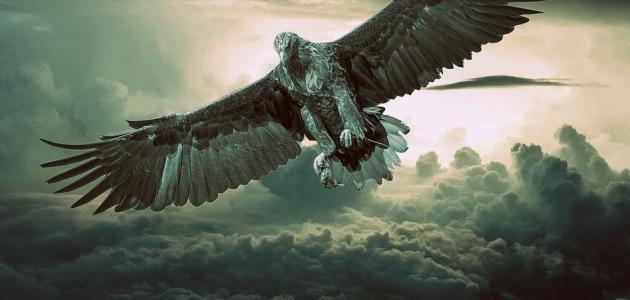 ما هو طير الابابيل