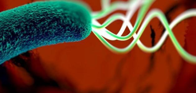 ما هي أعراض بكتيريا المعدة