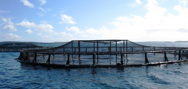 ما مزايا وعيوب الزراعة المائية