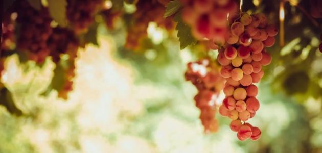 كم عدد السعرات الحرارية في العنب
