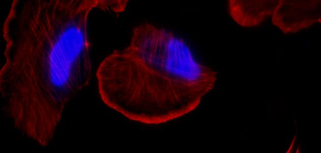 أقسام الهيكل الخلوي