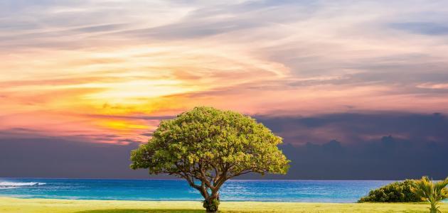 كيفية المحافظة على الشجرة