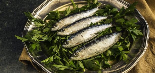 كيفية عمل سمك السردين