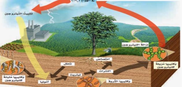 ملخص عن دورة النيتروجين