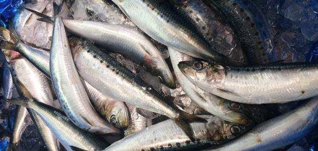 ما هي فوائد سمك السردين للشعر