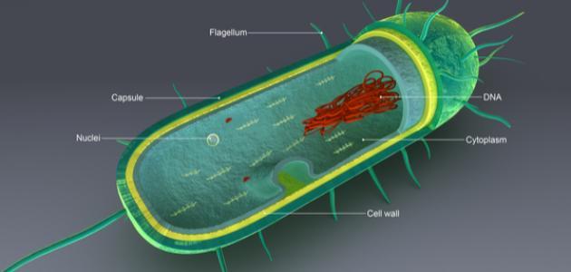 مكونات الخلية البكتيرية