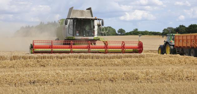 كيفية حصاد القمح