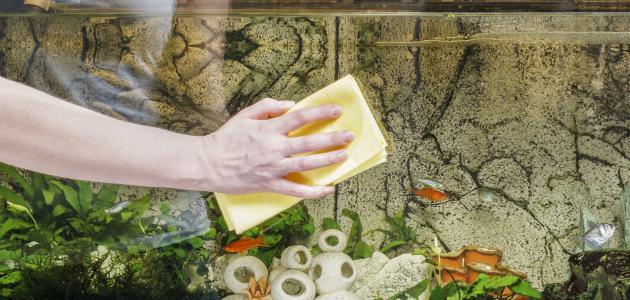 كيفية تنظيف حوض السمك