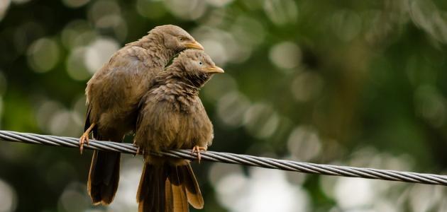 كيفية تكاثر الطيور