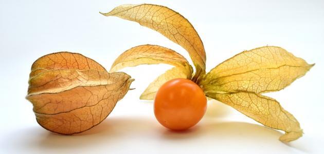 ماهو نبات الحرنكش