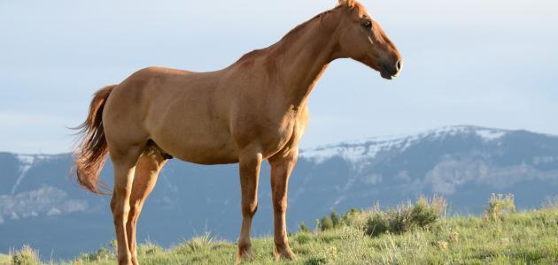 خصائص الحصان