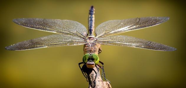 خصائص الحشرات