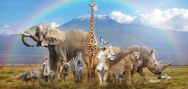 كيفية حماية الحيوانات من الانقراض